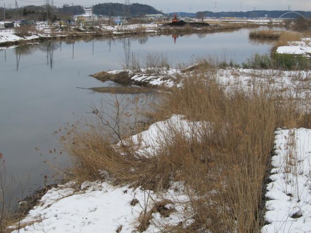 2014年2月8日 大雪 印旛沼
